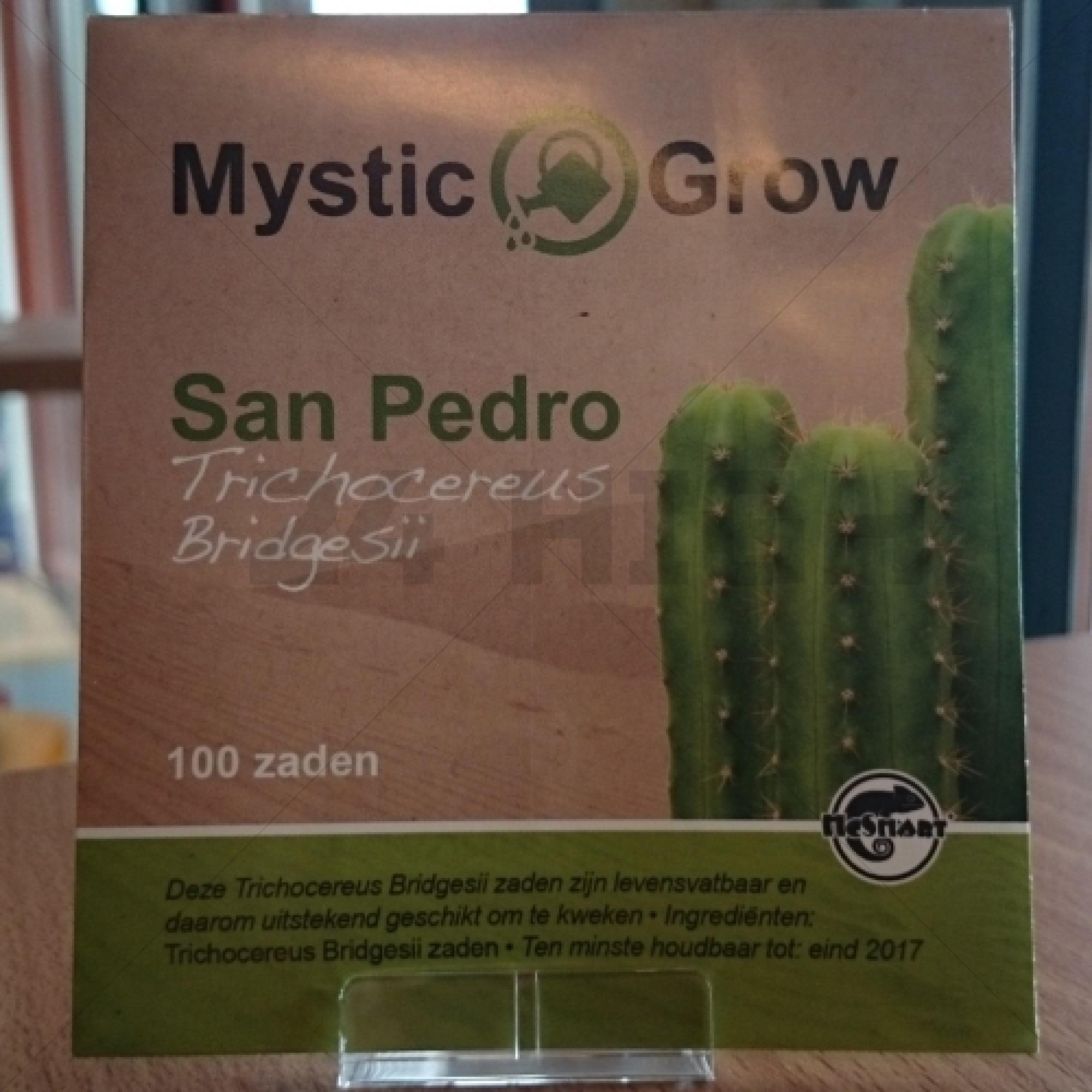 San Pedro seeds (Trichocereus bridgesii)