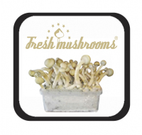 Fresh Mushrooms Growkits